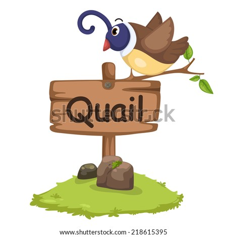 animal alphabet letter Q for quail illustration vector - stock vector