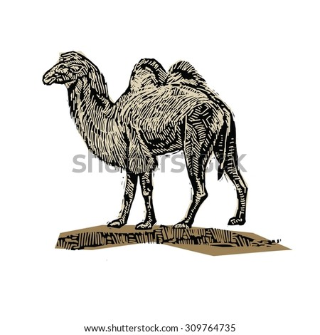 animal camel vintage vector engraving illustration - stock vector
