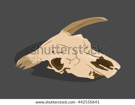 Animal head bones, scull vector illustration