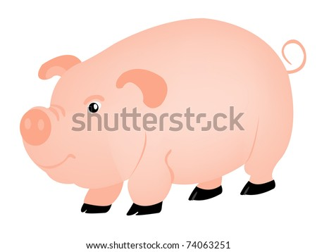 Animal pig on white background