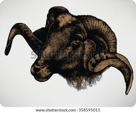 Animal sheep, hand-drawing. Vector illustration. - stock vector