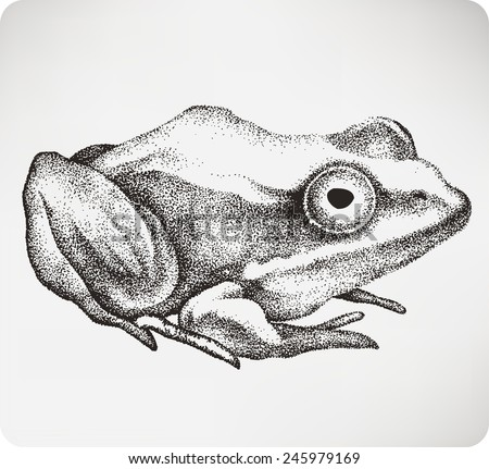 Animal toad, hand-drawing. Vector illustration..jpg - stock vector