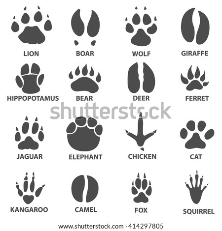 Fox Paw Stock Images, Royalty-Free Images & Vectors | Shutterstock