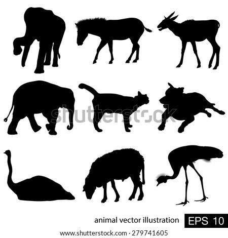 animal vector illustration