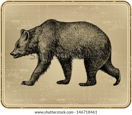 Animal wild bear, hand-drawing. Vector illustration. - stock vector