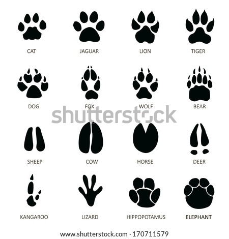 Paw Print Stock Images, Royalty-Free Images & Vectors | Shutterstock