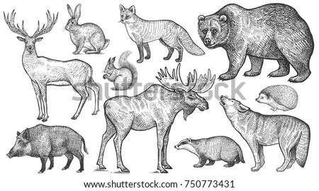 Animals of Europe set. Wolf, badger, hedgehog, fox, moose, deer, bear, rabbit, squirrel, boar isolated. Black and white. Vector art illustration. Wildlife mammals. Nature objects. Vintage engraving.