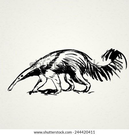 Anteater hand drawn. Vector illustration. Realistic sketch. Zoo. - stock vector