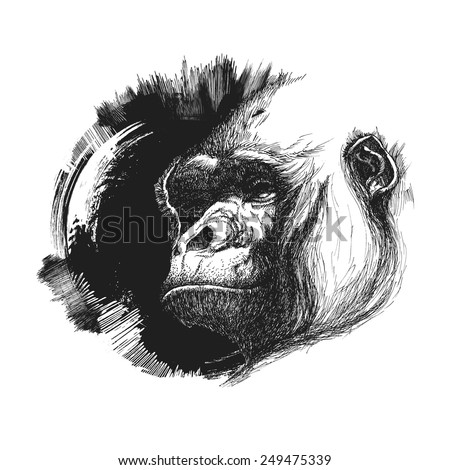 Ape head logo in black and white. Vector illustration - stock vector
