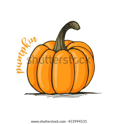 Appetizing sketch style pumpkin vector illustration isolated on white background. Traditional Halloween pumpkin - stock vector