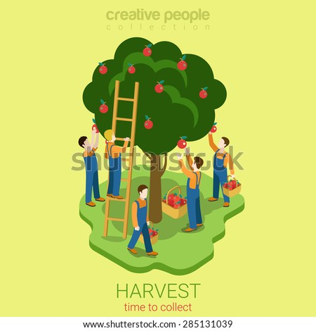 Apple harvest collect season concept flat 3d web isometric infographic concept vector. Men pluck ripe apples from the tree to the basket. Creative people collection. - stock vector