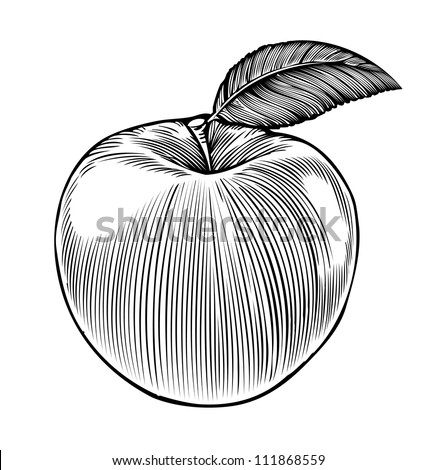 Apple in engraving style - stock vector