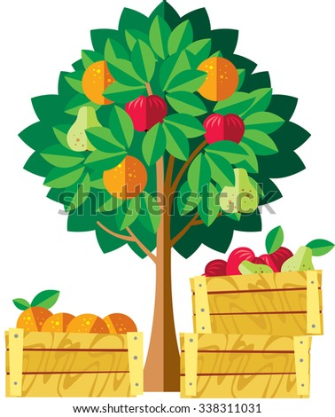 Apple orange pear orchard with wooden box. Vector illustration - stock vector