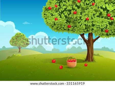 Apple orchard with basket of apples. Landscape background. Vector illustration - stock vector