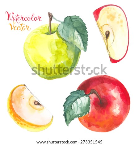 Apples painted with watercolors on white paper. Red apple, green apple, leaf, half an vector apple - stock vector