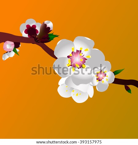 Apricot blossom Vector Illustration