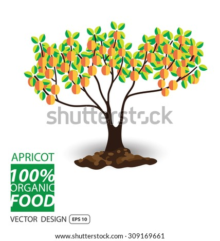 Apricot, fruits vector illustration. - stock vector