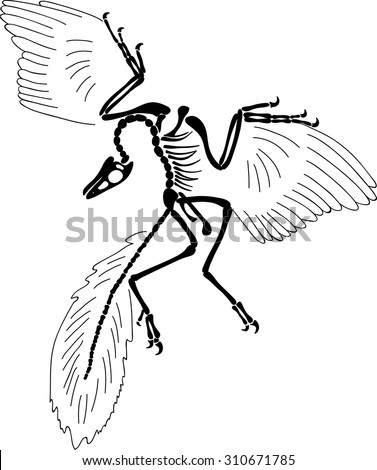 owl skull diagram owl tattoo drawing wiring diagram