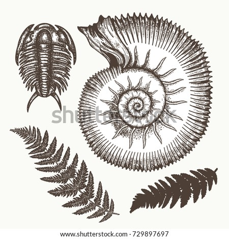 Archeology and paleontology. Prehistoric art. Most ancient minerals. Ancient ammonites fern, trilobite hand drawn vector