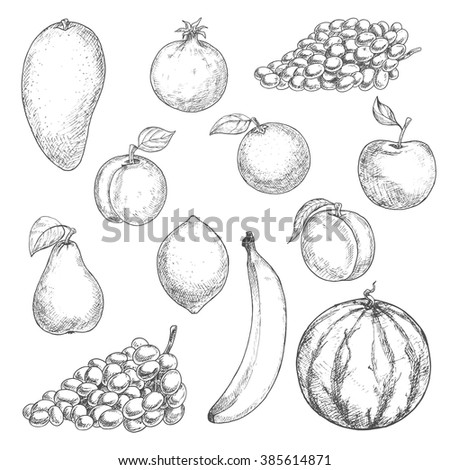 Aroma mango and refreshing orange, sweet banana and juicy lemon, peach and watermelon, grape and crunchy apple, ripe pear, apricot and pomegranate fruits sketches. Retro engraving stylized fruits - stock vector