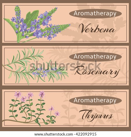 Aromatherapy set collection. Verbena, rosemary, thymus banner set. Vector illustration EPS 10.