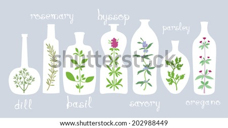 Aromatic Plants in Bottles. Different bottles with various aromatic herbs. Some hand drawn text. Isolated design elements for cooking or homeopathic ideas. Vector file  EPS8, all elements are grouped. - stock vector