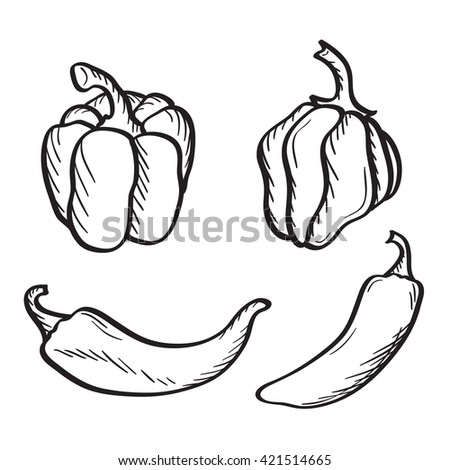 Artistic hand drawn sketches of hot chili, habanero and jalapeno peppers and paprika. - stock vector