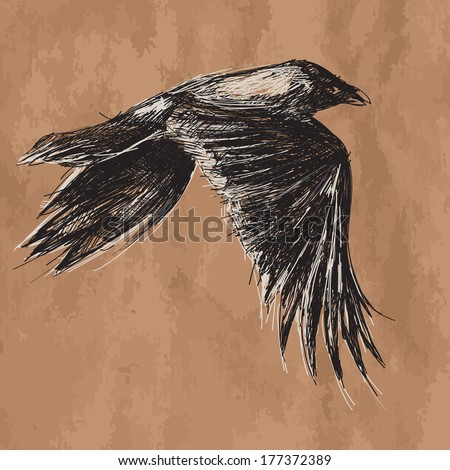 artistic vector drawing of flying african crow on craft - stock vector