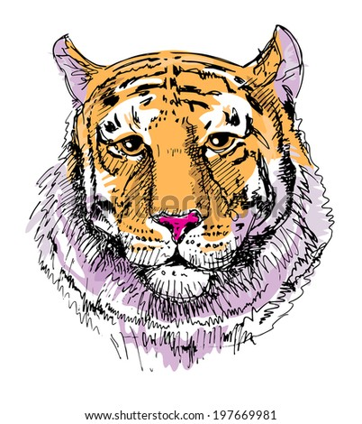 Artwork tiger, sketch drawing, isolated on white background. Head animals vector illustration  - stock vector