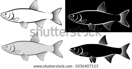 Line Art Of Fish : Asp fish clip art illustration line stock vector 1036407115