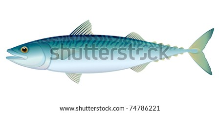 """Atlantic Mackerel (Scomber scombrus) saltwater fish. """"Full compatible. Created with gradients."""" - stock vector"""
