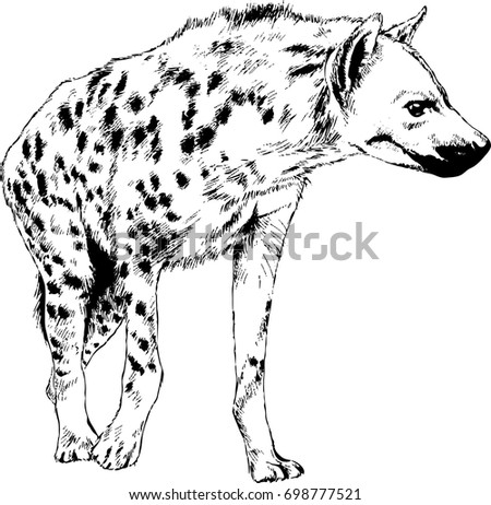 attacking the hyena with a snarling mouth painted by hand on a white background separated tattoo