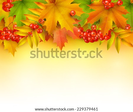 Autumn background or border, colorful autumn leaves and rowan berries - stock vector