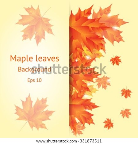 Autumn background with a bouquet of maple leaves. Vector card