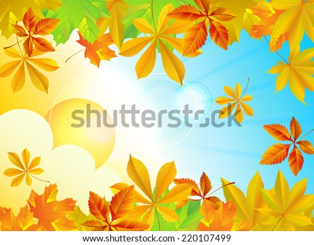 Autumn background with different leaves, sky and sun