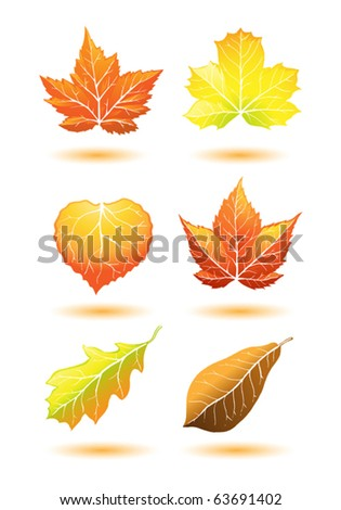 autumn leaf collection - stock vector