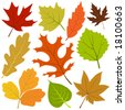 autumn leaf vector - stock vector