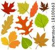 autumn leaf vector - stock vector