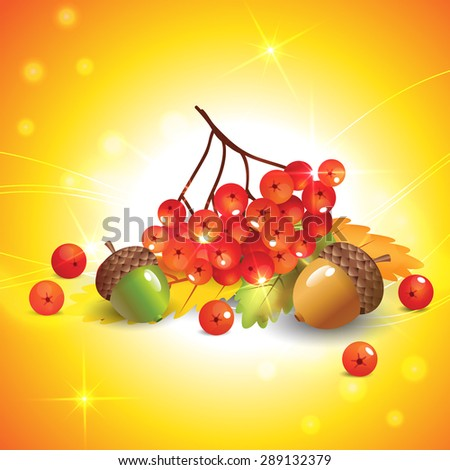 Autumn leaves, acorns and rowan for your design - stock vector