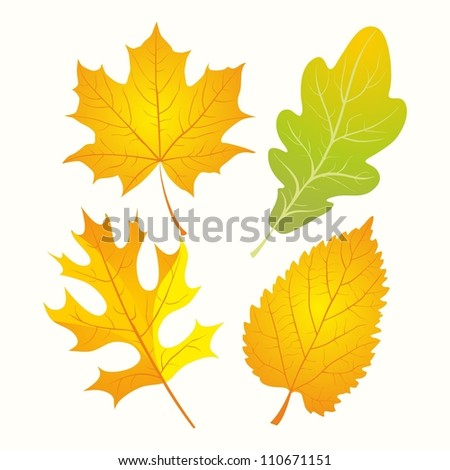Autumn Leaves. Set of golden autumn leaves. Oak, maple, birch leaves. - stock vector