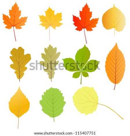 Autumn leaves set vector background - stock vector