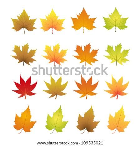autumn leaves vector - stock vector