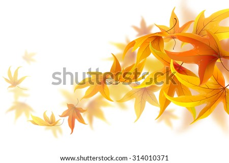 Autumn maple leaves falling and spinning isolated on white - stock vector