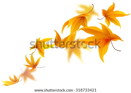 Autumn maple leaves falling  isolated on white - stock vector