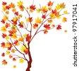 Autumn maple on white background - stock vector