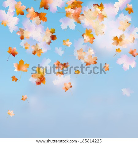 Autumn sky leaf. And also includes EPS 10 vector - stock vector