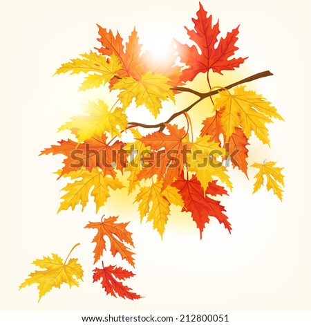 Autumn tree with beautiful flying leaves . Autumn card.