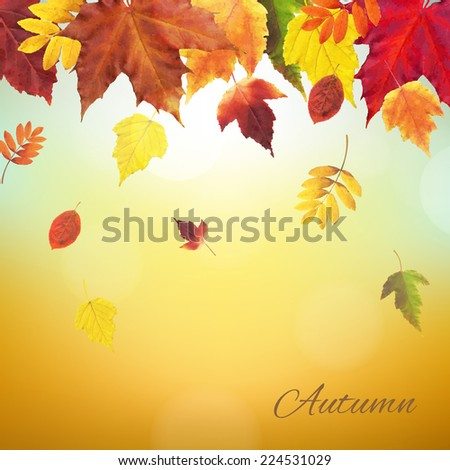 Autumn Vintage Border, Vector Illustration - stock vector