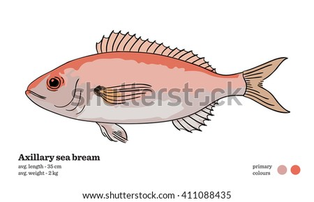 Axillary sea bream fish vector illustration