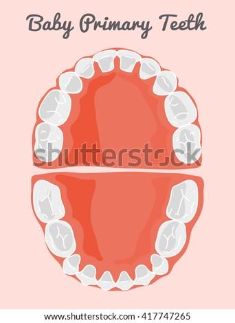 Baby Teething Stock Vectors, Images & Vector Art | Shutterstock